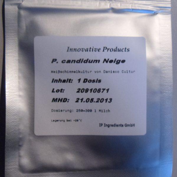 Penicillium candidum Neige